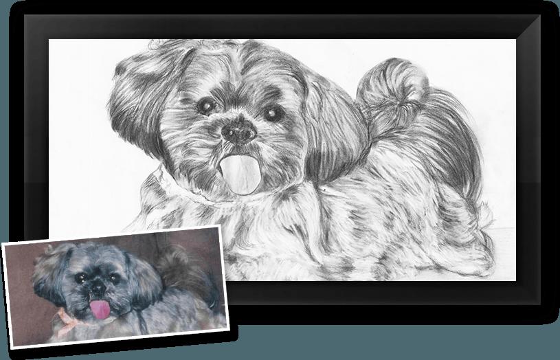 This is a charcoal pet portrait