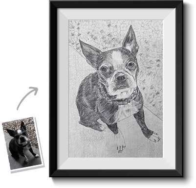 This is an example of a pet portrait from photo