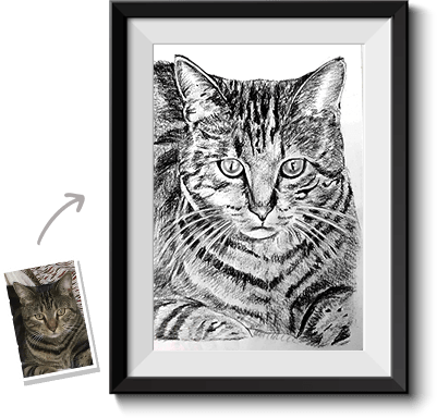 This is an example of a pet sketch from photo